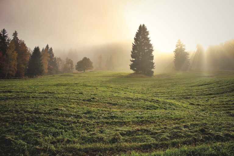 simple meadow with fog